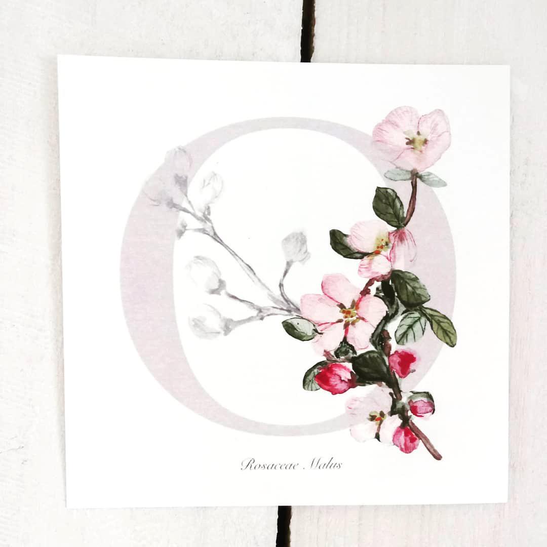 Omenankukka postikorti